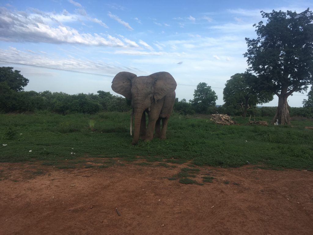 Waar vind je olifanten in Ghana