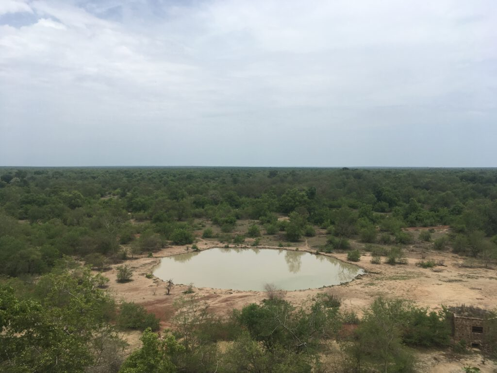 Goedkoop op safari in Afrika